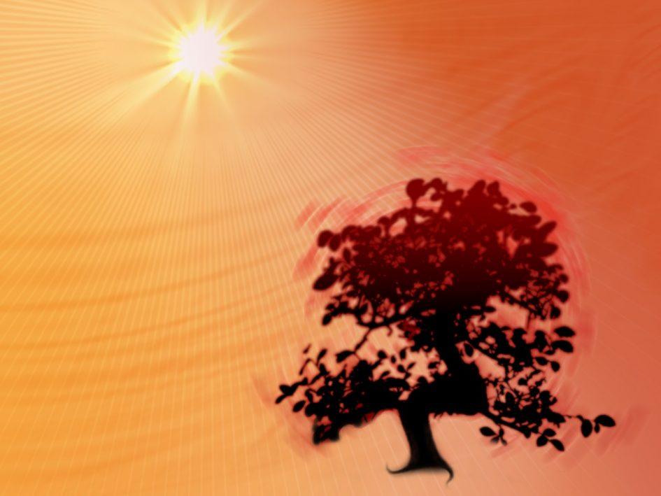 bonsai wallpaper 03 ndash - photo #16